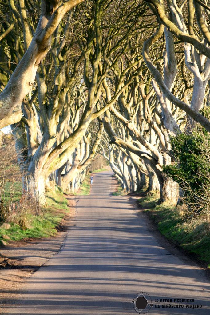 El Camino real - Dark Hedges, escenario de Juego de Tronos en Irlanda del Norte