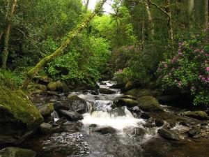 El parque de Killarney es uno de los más famosos de Irlanda
