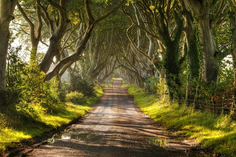 Camino de Dark Hedges